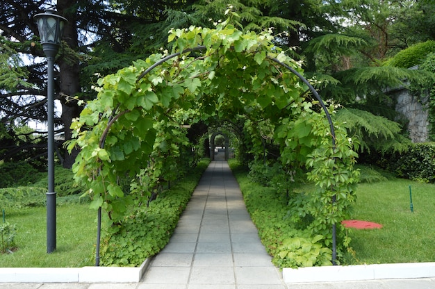 Arch and trellis, entwined vine and lantern in a beautiful park in the summer.