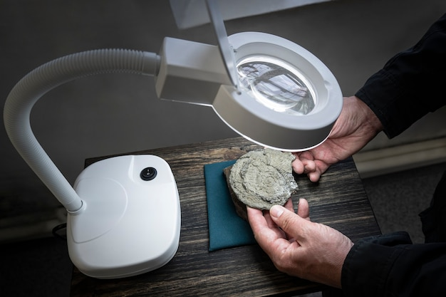 An archaeological find. ancient prehistoric fossils.a scientist archaeologist examines fossils, archaeological finds in a magnifying glass. first ancient primitive animals.