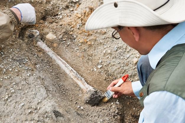 野外調査の考古学者は、発掘された骨を地面から掃除します