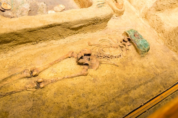 人間の埋葬の考古学的発掘。