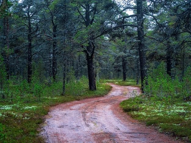 曲がりくねった道のある北極の密集した北部の森。自然な背景。