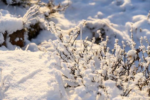 冬の北極の風景。ツンドラの氷と草。