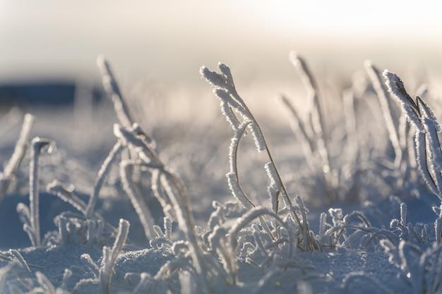 Арктический пейзаж в зимнее время. трава со льдом в тундре.