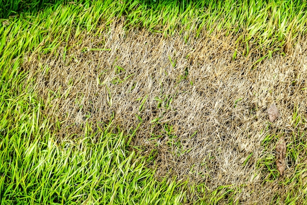 Area of dry grass can not grow, something cover this and do not has sun light