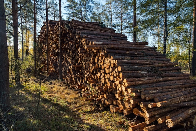 Зона незаконной вырубки растительности в лесу, груды вырубок возле лесного массива.