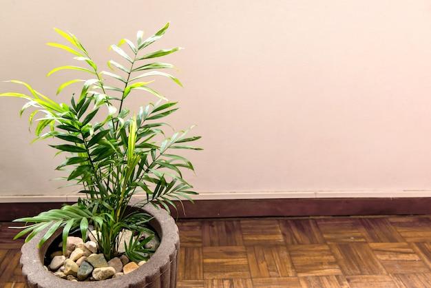 아레카 야자수 실내 식물, 녹색 단풍.