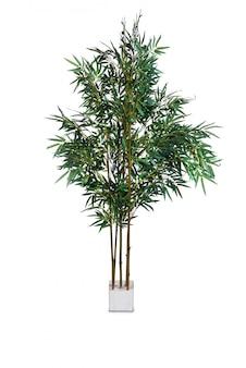 Areca palm isolated on the white background