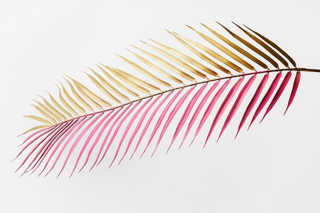 Areca palm leaf painted in gold and magenta on an off white background