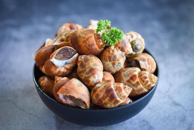 バビロニアareolata貝の魚介類のボウルを食べたり調理したりする準備ができています。斑点を付けられたバビロン海シェルリンペット