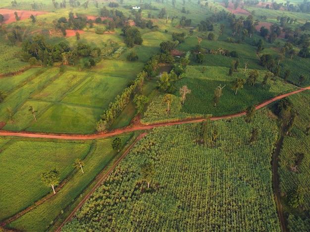 田んぼとサトウキビ畑の空中写真。