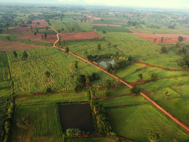 Arial view of rice fields and sugarcane fields.