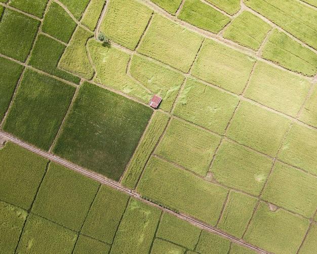 Arial взгляд старого гальванизированного коттеджа в рисовых полях растя. концепция сельского хозяйства