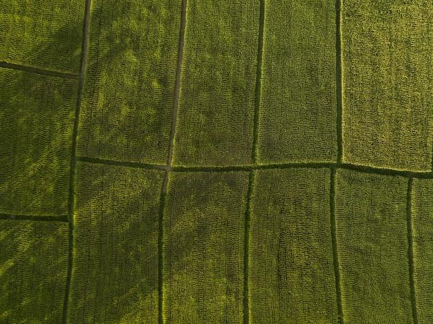 Arial вид выращивания рисовых полей. концепция сельского хозяйства