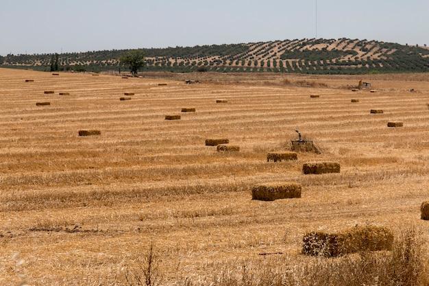 Arid alentejo landscape