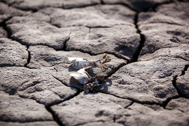Arid background. drought, dry earth, crack, sun, peace, sadness, dried up water, a crack