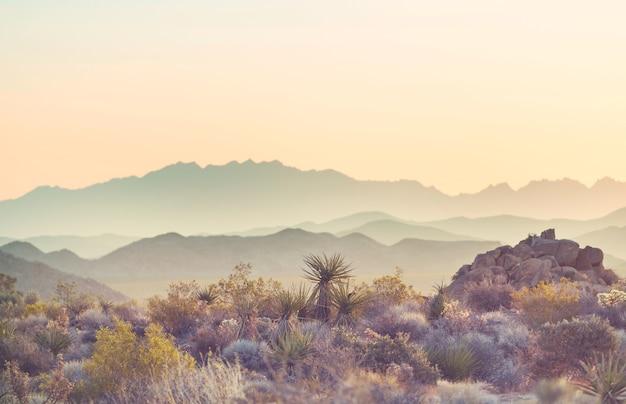 アメリカ合衆国、日の出のアリゾナ砂漠の風景