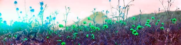 아르메니아 양귀비 밭
