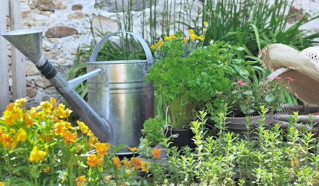 Aromatic plant and flowers with a rustic watering can in a garden