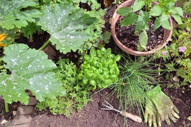 土壌にガーデニングツールを使用して庭で育つ芳香植物と野菜植物