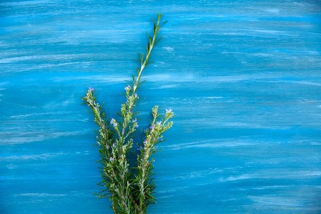 Aromatic rosemary plant