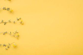 Arranged dried flower on yellow background