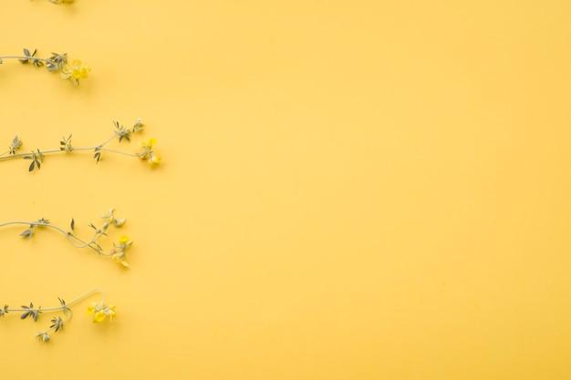 黄色の背景に整えられた乾燥した花