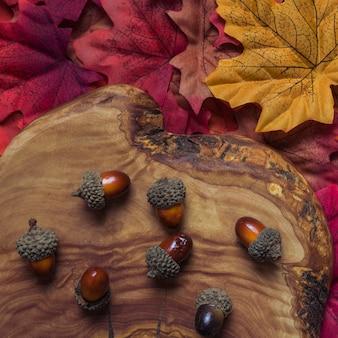 Arrangement of autumn acorns on wood stump