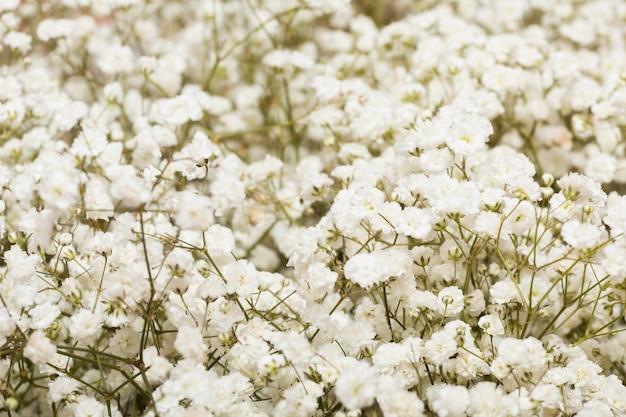 Arrangement of beautiful flowers background
