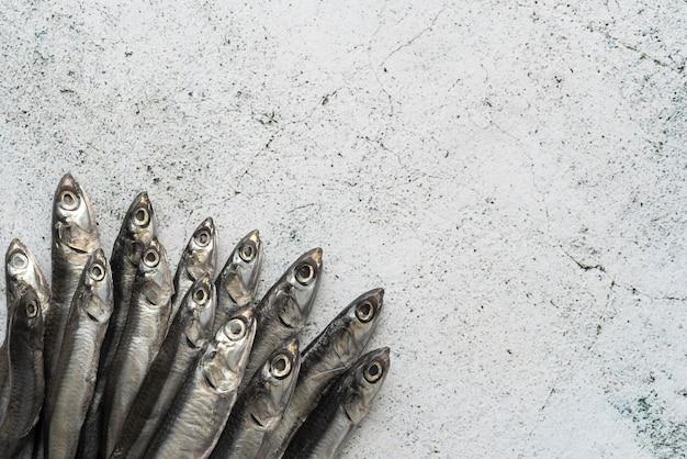 Arrangement of delicious sea food