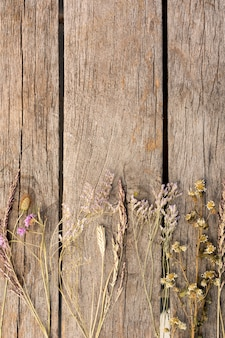 Arrangement of dried plants  on wooden background with copy space
