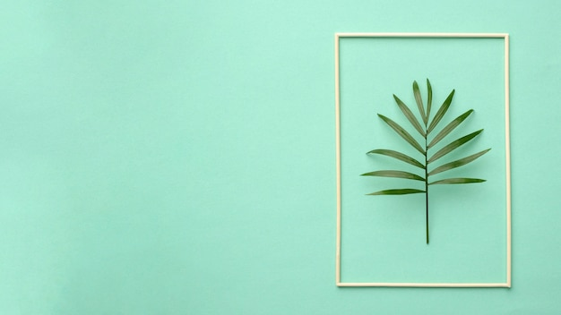 Arrangement of green leaves with copy space