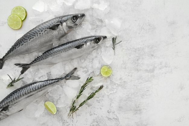 Arrangement of healthy sea food