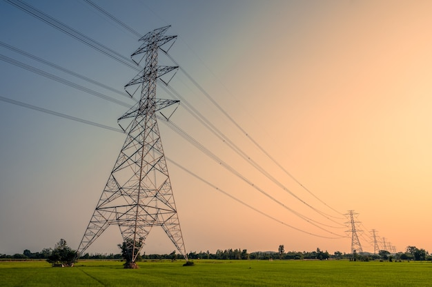 Arrangement of high voltage pole, transmission tower on rice field in countryside at sunset