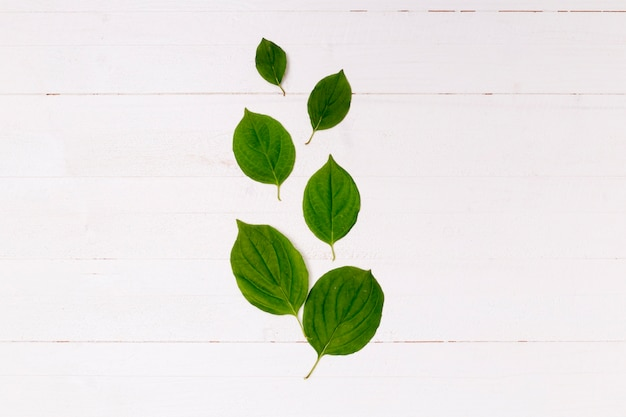 Arrangement of leaves on wooden background