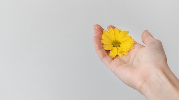 Композиция из красиво распустившегося цветка