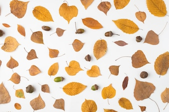 Arrangement of fallen leaves and acorns