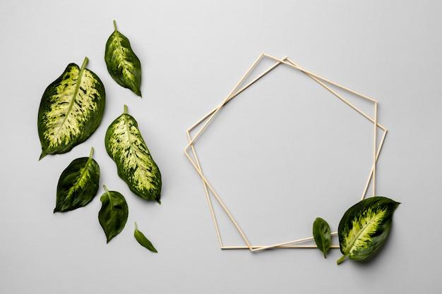 フレーム付きの緑の葉の配置