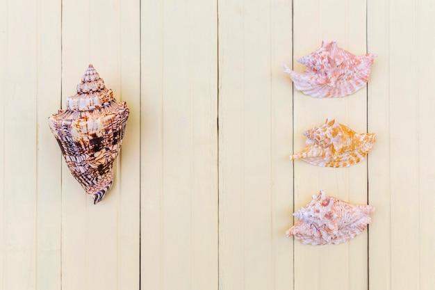 貝殻の配列