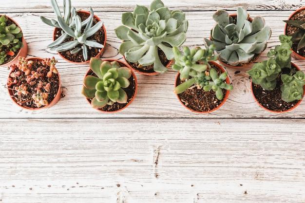 다육 식물 또는 선인장 다육 식물의 배열