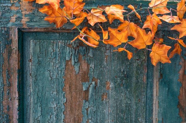 Arrangement of old scratched door with leaves