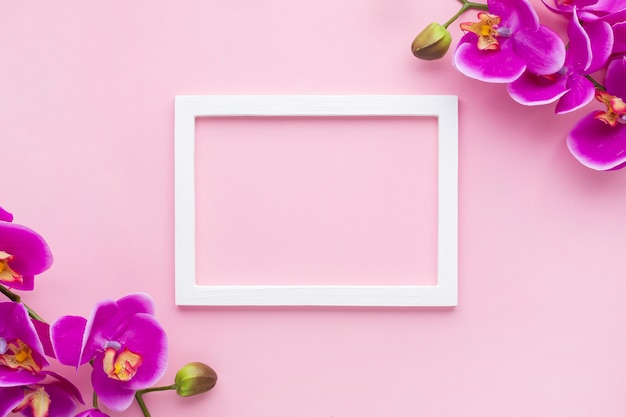 Arrangement of orchid flowers on a pink copy space background