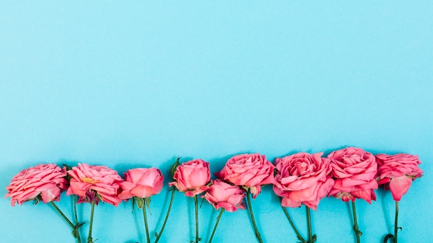 Arrangement of pink flowers in a row over turquoise backdrop