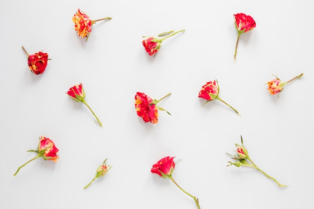 Arrangement of red carnation flowers on white background