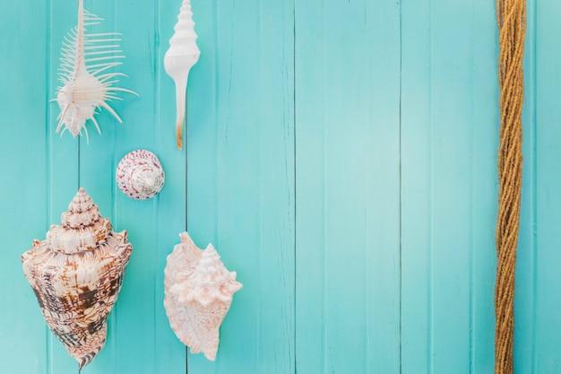 Arrangement of rope and seashells