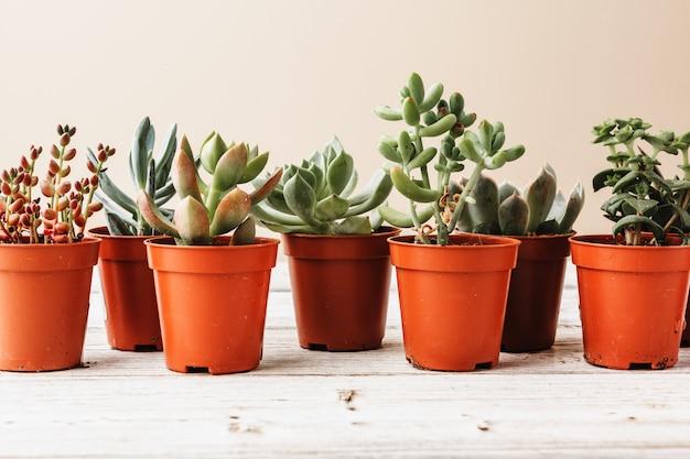 Arrangement of the succulents or cactus succulents