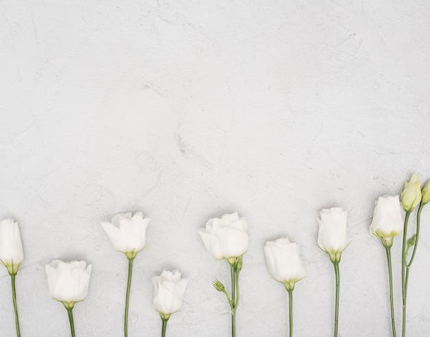 Arrangement of white roses flat lay