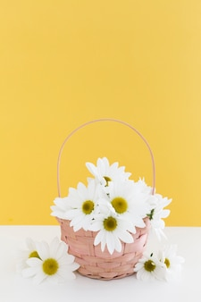 Arrangement with basket of daisies and yellow wall
