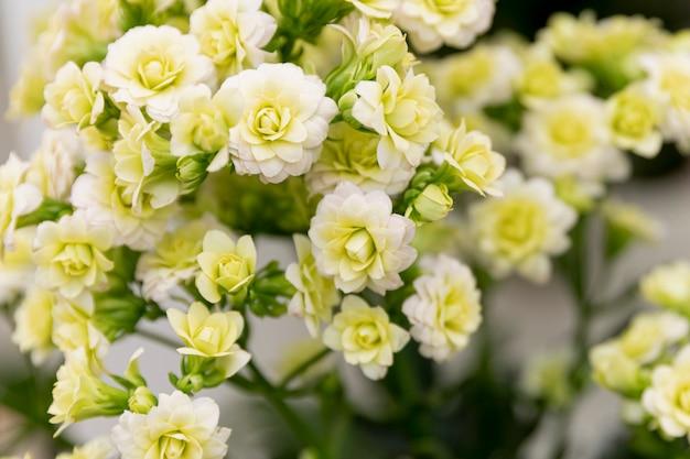 꽃의 아름 다운 부케와 배열