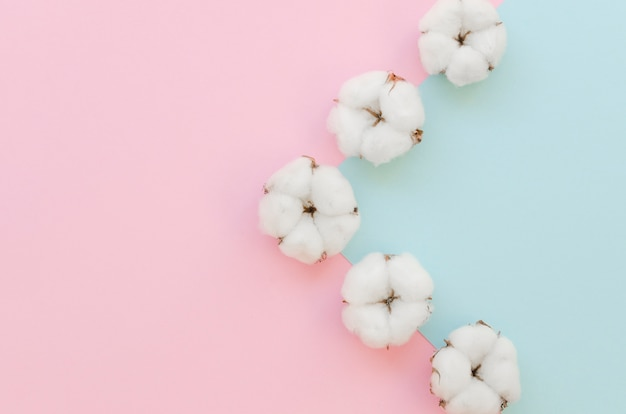 Arrangement with cotton flowers and colorful background