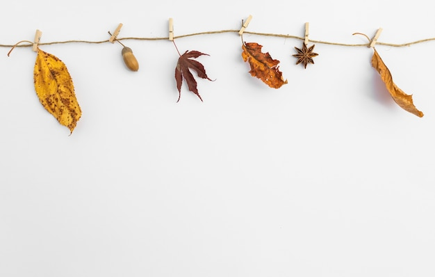 Arrangement with leaves hanging on clothesline